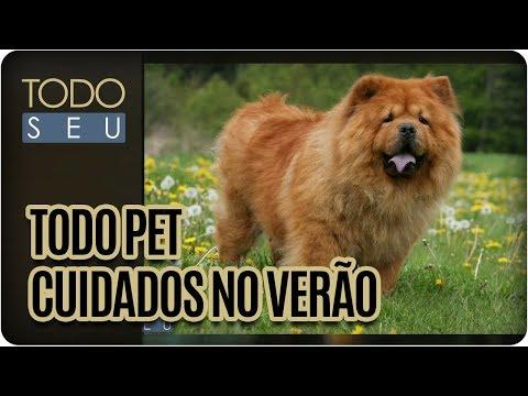 Dicas Para Aliviar O Calor Dos Pets - Todo Seu (26/01/18)