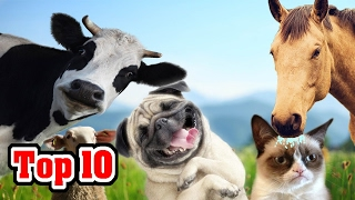 Top 10 Domesticated Animals and Their Origins