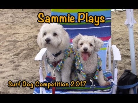 Surf Dog Competition 2017
