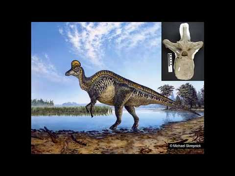 Alberta: Land Of Dinosaurs And Other Palaeontological Wonders