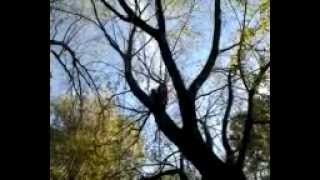 Trees climbing ,Novi Sad
