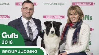 Border Collie - Pastoral Group Winner's Interview | Crufts 2018