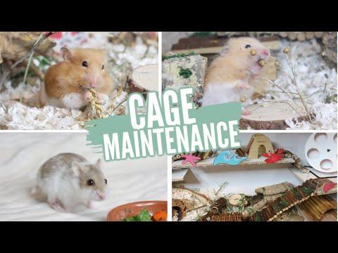 hamster-cage-maintenance!
