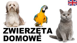 Learn Polish Vocabulary - Pets 1 (Zwierzęta domowe)
