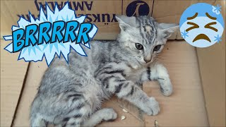 Cute Kitten Caught Cold  l Adorable Cats - Adorable Kittens