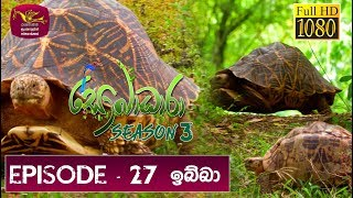 Sobadhara - Sri Lanka Wildlife Documentary | 2019-09-27 | ( ඉබ්බා ) Tortoise Thumbnail