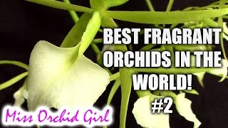 Best fragrant Orchids in the world! #2