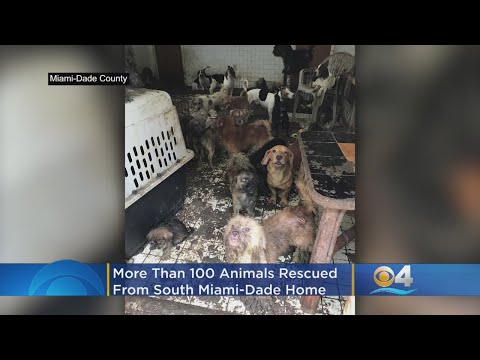 More Than 100 Dogs, Cats Rescued From Deplorable Conditions
