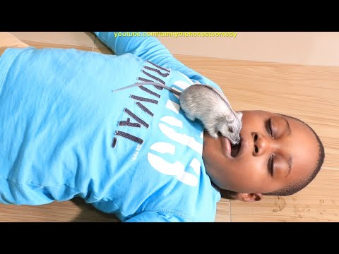 DON'T SLEEP ON THE FLOOR WITH YOUR MOUTH OPEN (STOP MOTION COMEDY FILM) Family The Honest Comedy
