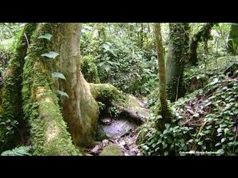 Parque Reserva de Chicaque - Cundinamarca - Colombia - TvAgro por Juan Gonzalo Angel