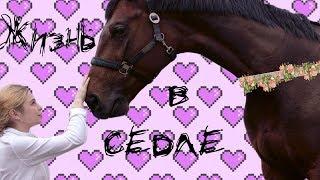 Жизнь в седле   Как я начала заниматься конным спортом