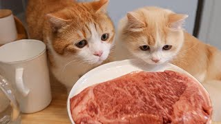 [Cat Live] A stay-at-home vlog to eat steak and excise with my cats
