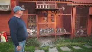 WG Kosakowo - gołębie na sprzedaż, zdjęcia zrobione, itp. - 25.09.2019r.