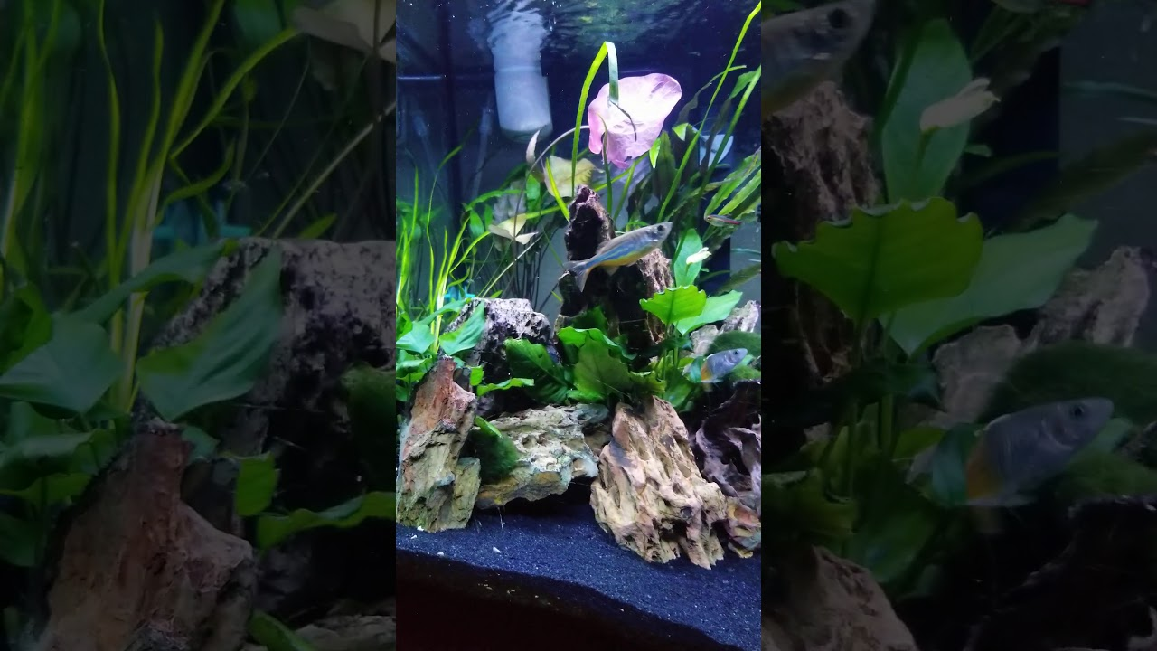 My first aquascape - YouTube