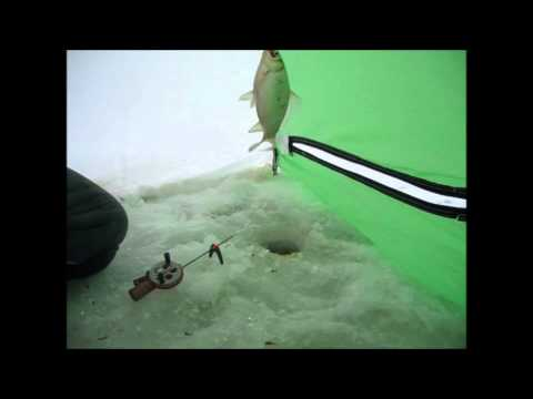 Как правильно ловить карася зимой на мормышку - заметки рыболова
