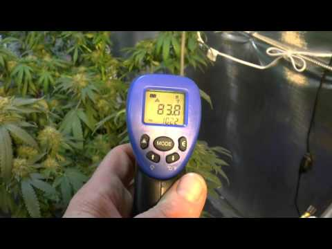 Grow Room Temperature ,  Are Your  Buds Hot ?