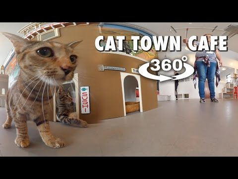 Cat Town Cafe (360 4K VR)