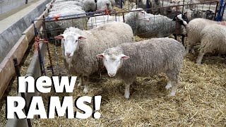 i-bought-new-rams-vlog-217