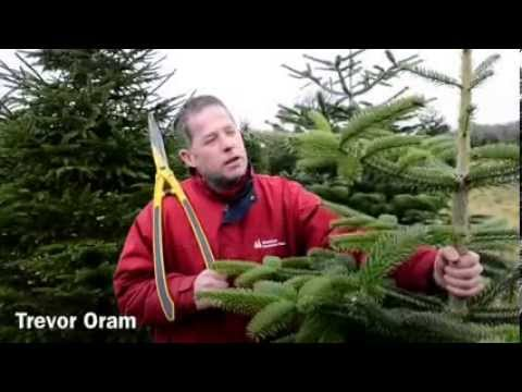 Wrentham Christmas Trees - Wrentham Christmas Trees - YouTube