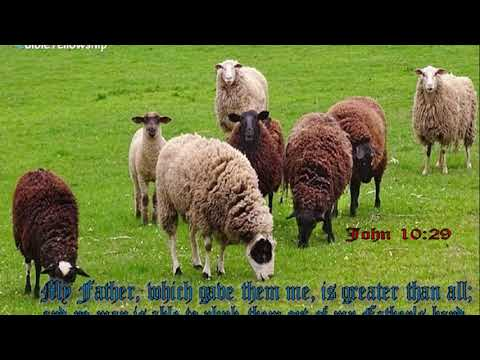 Feed My Sheep Song