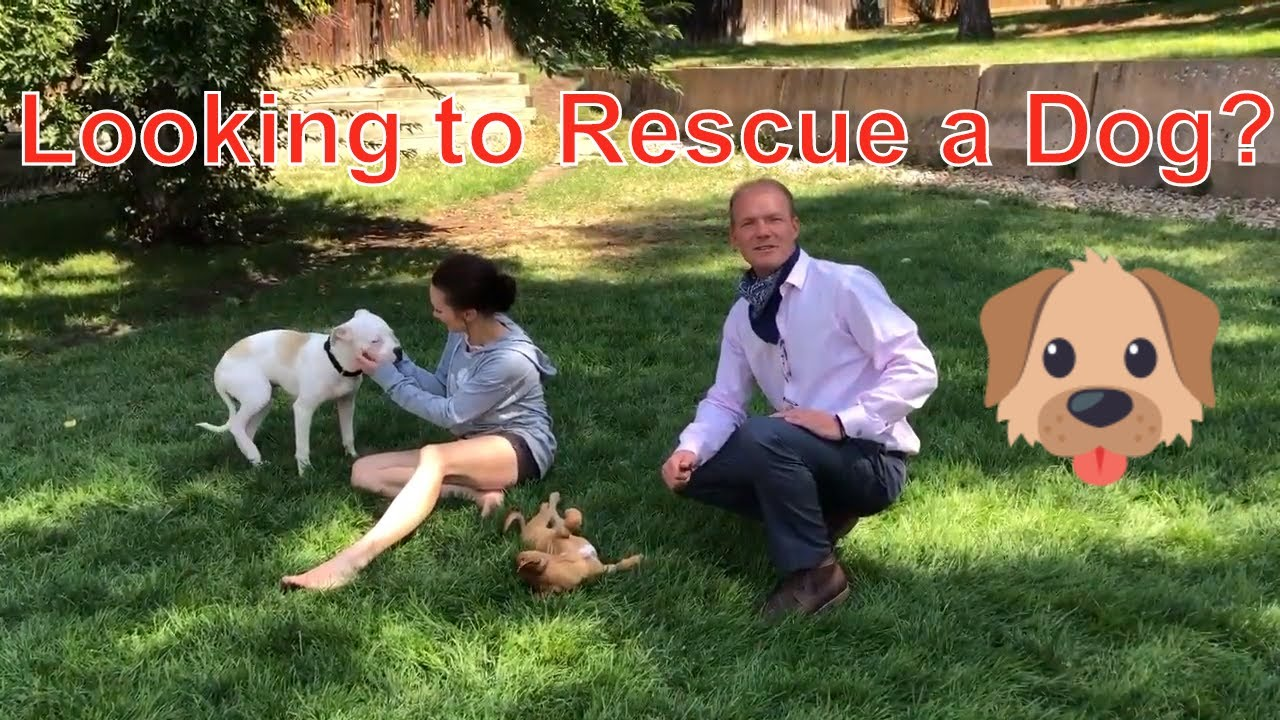 Looking for a rescue dog to adopt?
