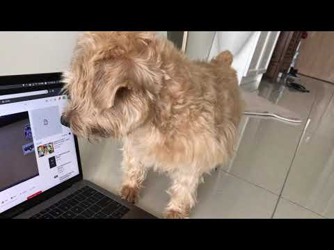 youtube binging with dog
