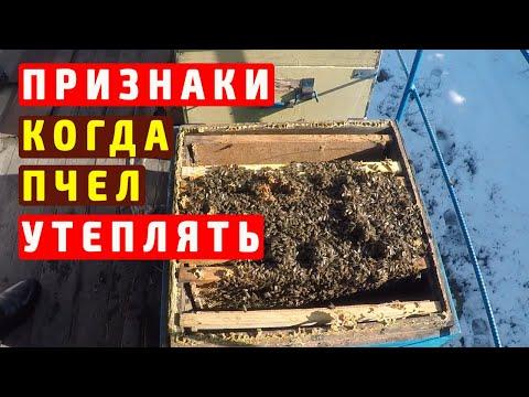 Пчеловодство зимой   Пора утеплять пчел  Внимание корма