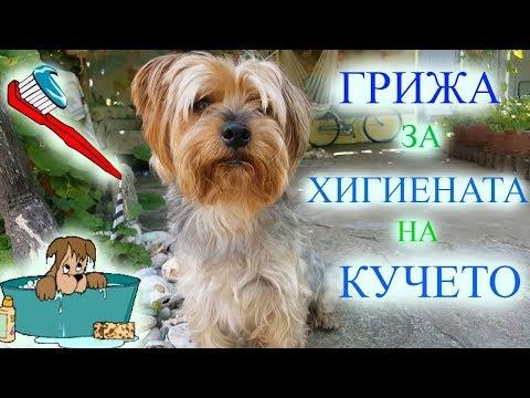 Грижи За Хигиената На Кучето/Ася Енева/Care&Hygiene for Dogs/Asya Eneva