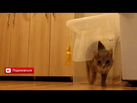 Закрытый туалет для кота своими руками