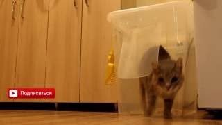 VIP туалет для кошки женскими руками
