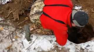 Охота на барсука в норе с ягдтерьером