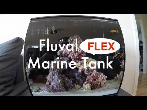 Fluval Flex Marine - 5 Week Update