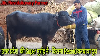 👍Super Murrah Buffalo FIRST LACTATION having Incredible Milk Yield @Dagar Farm @Ghaziabad U.P👍
