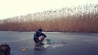 Ловля живца. Как я ловлю живца, для ловли щуки на жерлицы.