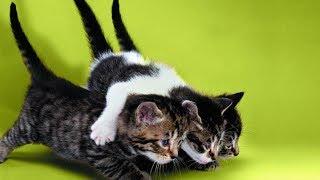 Смешные коты, кошки и другие животные (funny cats 2019) – ЗАПРЕЩЕНО ГРУСТИТЬ, ЛЮТЫЕ ШУТКИ