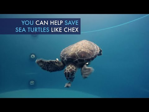 Support Marine Life Rescue on #GivingTuesday - Big and Small, CMA Helps Them All!