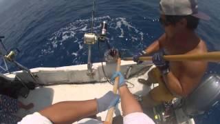 2015 ep 9 porpoise ahi yellowfin tuna fishing kona hawaii gopro