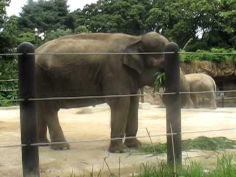 Bill xem voi tại vườn bách thú UENO Nhật bản