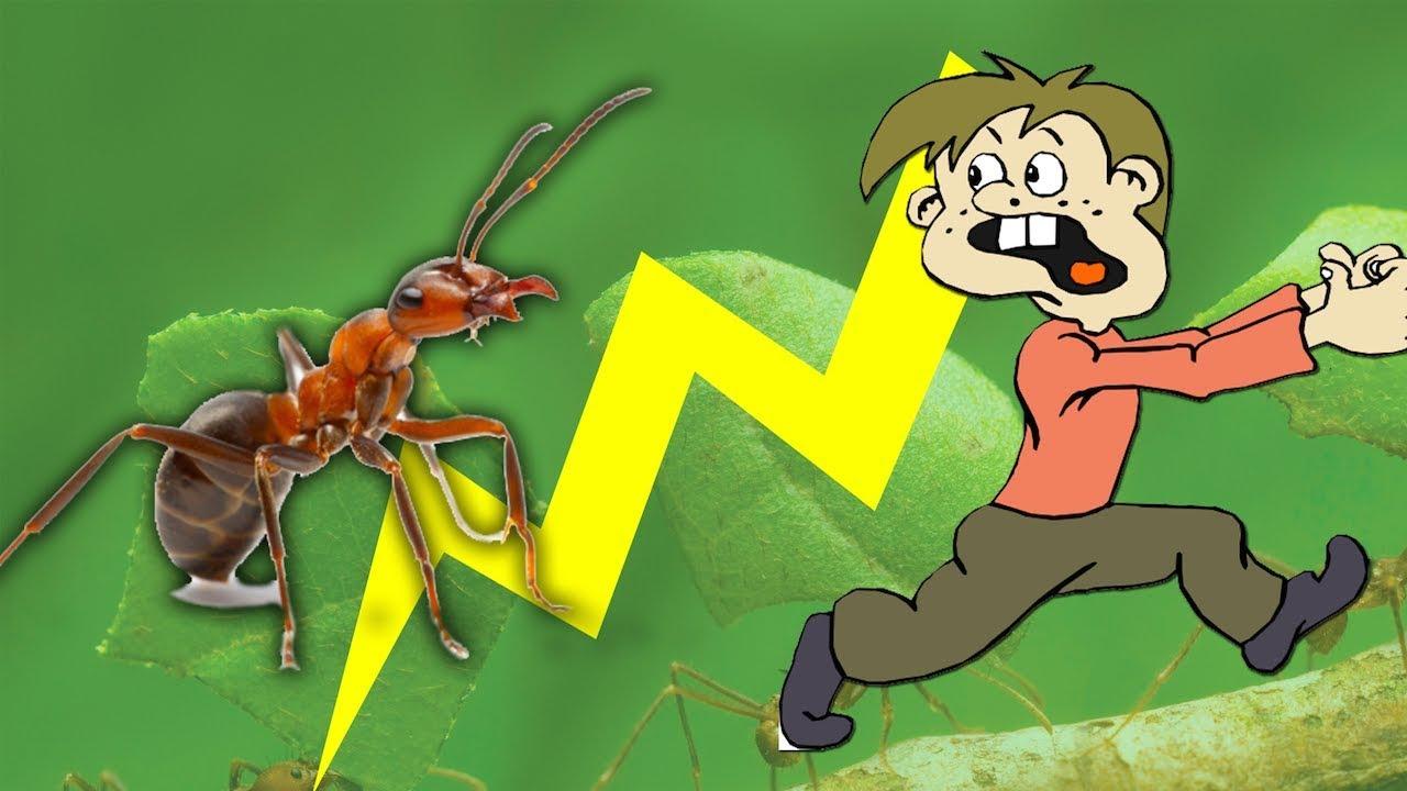 образования поверхности открытки труженики муравьи обычном режиме