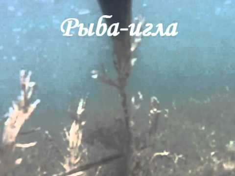 охота и рыбалка в бердянске