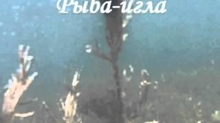 Подводная охота-Бердянск-охота на пиленгаса2011.avi(, 2011-06-25T19:35:47.000Z)
