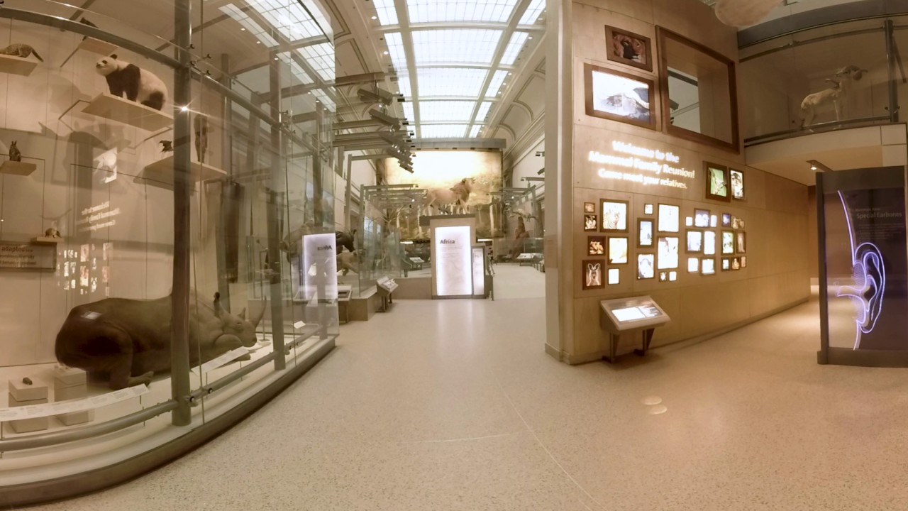 National Museum of Natural History Kenneth E. Behring Mammal Hall | Washington, DC 360 Video