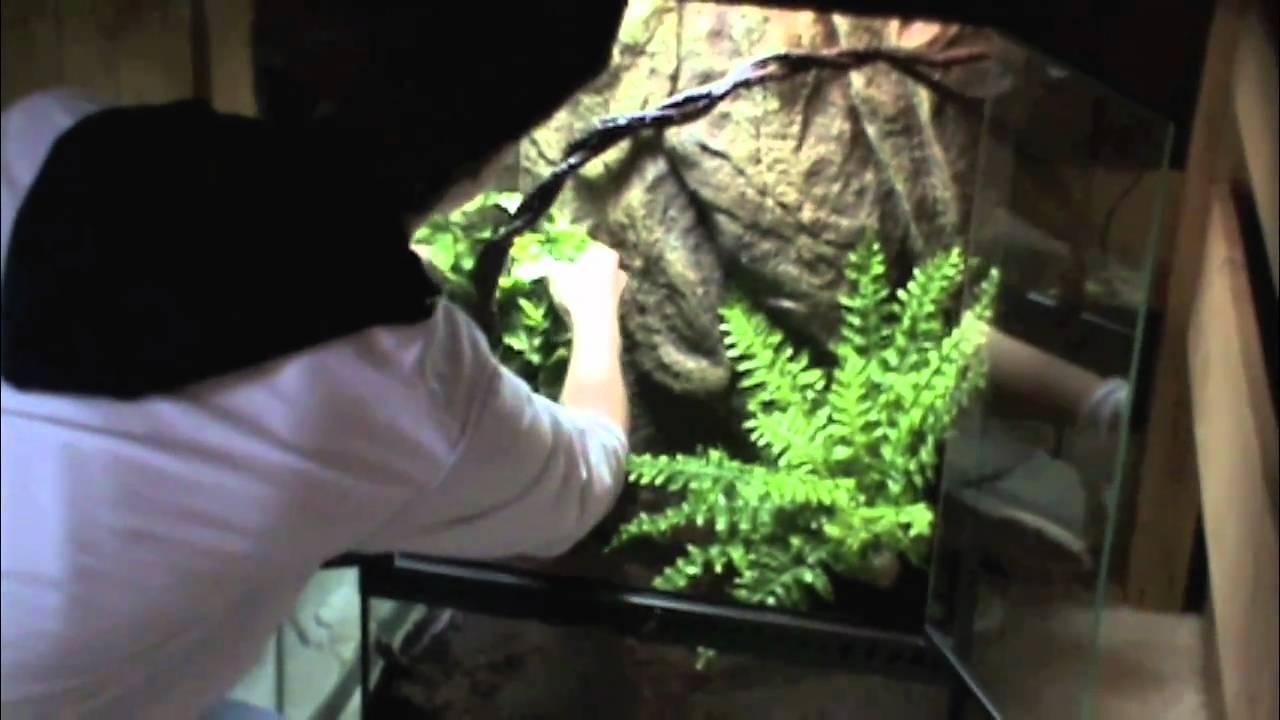 White S Tree Frog Habitat Setup Youtube