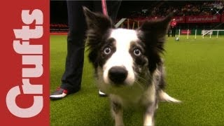 Repeat youtube video Funniest Moments of Crufts 2012