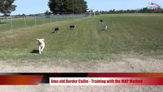 Training Your Dog To Come When Called