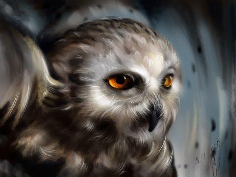 Залипательное видео.Рисование полярной совы.Компьютерная графика