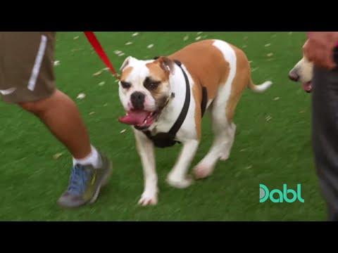 Cesar Millan Stops a Dog Fight
