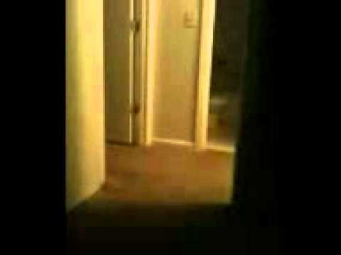 wampus cat sighting youtube