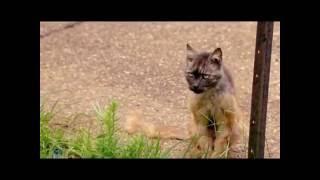 """Телеканал """"Домашние животные"""" - Спасение животных"""