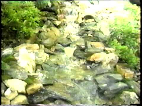 Wonderfalls Atlanta   Water Gardens Landscape; Ponds, Pools, Plants, Stone  Masonry Walls, Patios.